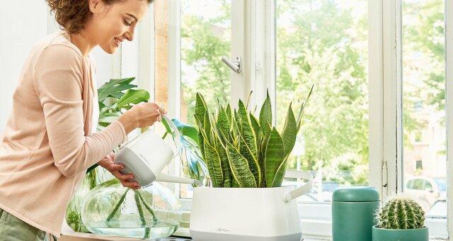 самые полезные для здоровья комнатные цветы