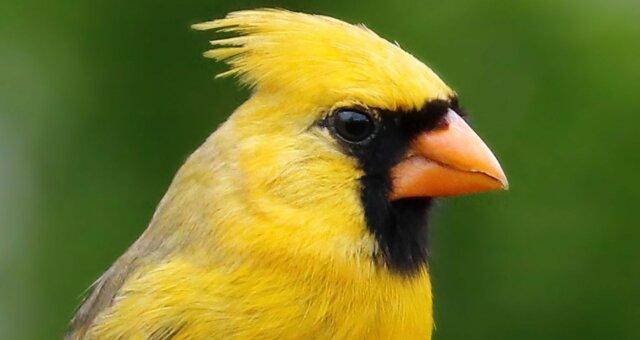 Уникальная птица
