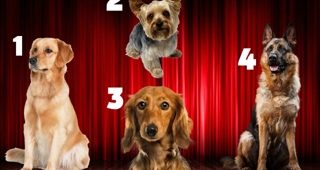 Тест на характер: выбери собаку и узнай, какой мужчина тебе подходит
