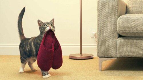 породи кішок, які піддаються дресируванню
