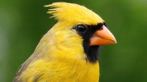 Унікальний птах