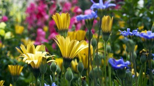 Найкрасивіші рослини Чорнобильського заповідника: унікальні фото