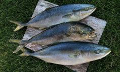 Ученые назвали худшую для здоровья рыбу