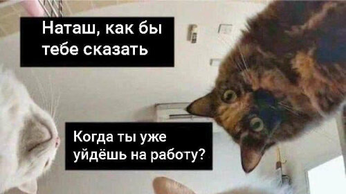"""Иди уже на работу, Наташа!: котики намекают хозяевам, что они засиделись на карантине (ФОТО, ВИДЕО)"