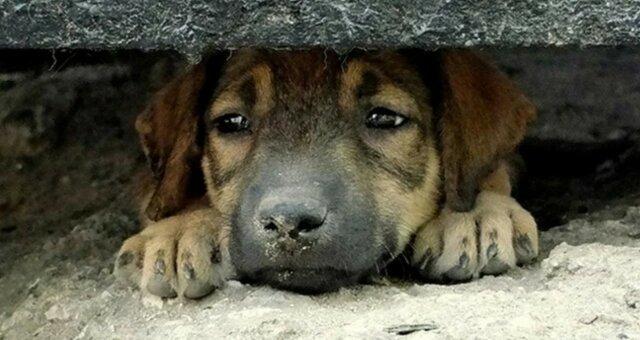 Хатико нашего времени: собака