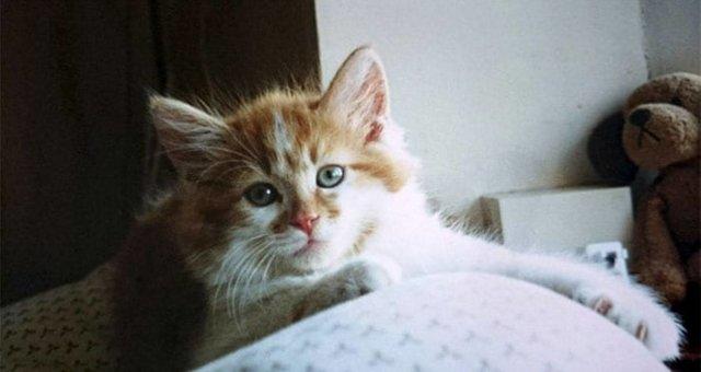 kitten-rubble-1