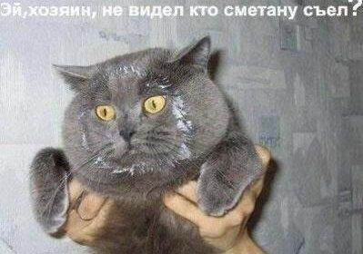 """""""Не виноват я, это все Шарик!"""": Сеть рассмешили коты-воришки, которых поймали с поличным"""