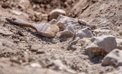 В Ірані археологи виявили загадкову давню стіну