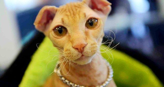 Странные кошки