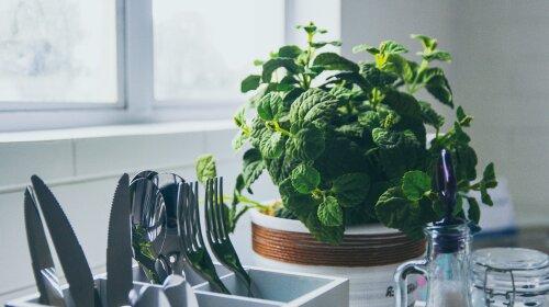 комнатные цветы, которые можно использовать в пищу