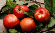 apple1_0