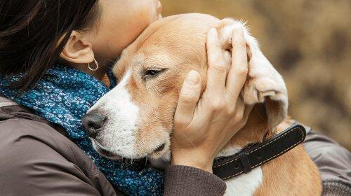 Найвірніші породи собак: три собаки з розвиненим почуттям відданості