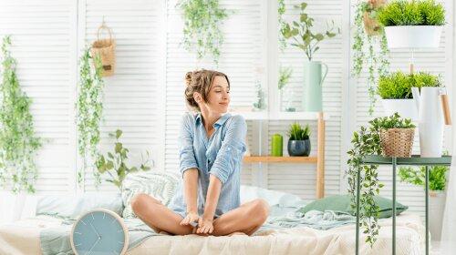Кімнатні квіти для здоров'я
