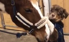 дружба собаки і коня