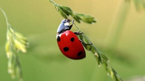 Проверь себя: пройди тест и выбери насекомое на картинке, а мы тебе расскажем о твоем нынешнем состоянии