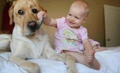 Собаки, которым не место в доме с детьми