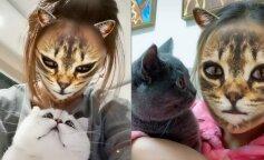 Сеть умилила реакция кошек на популярный фильтр в Instagram (видео)