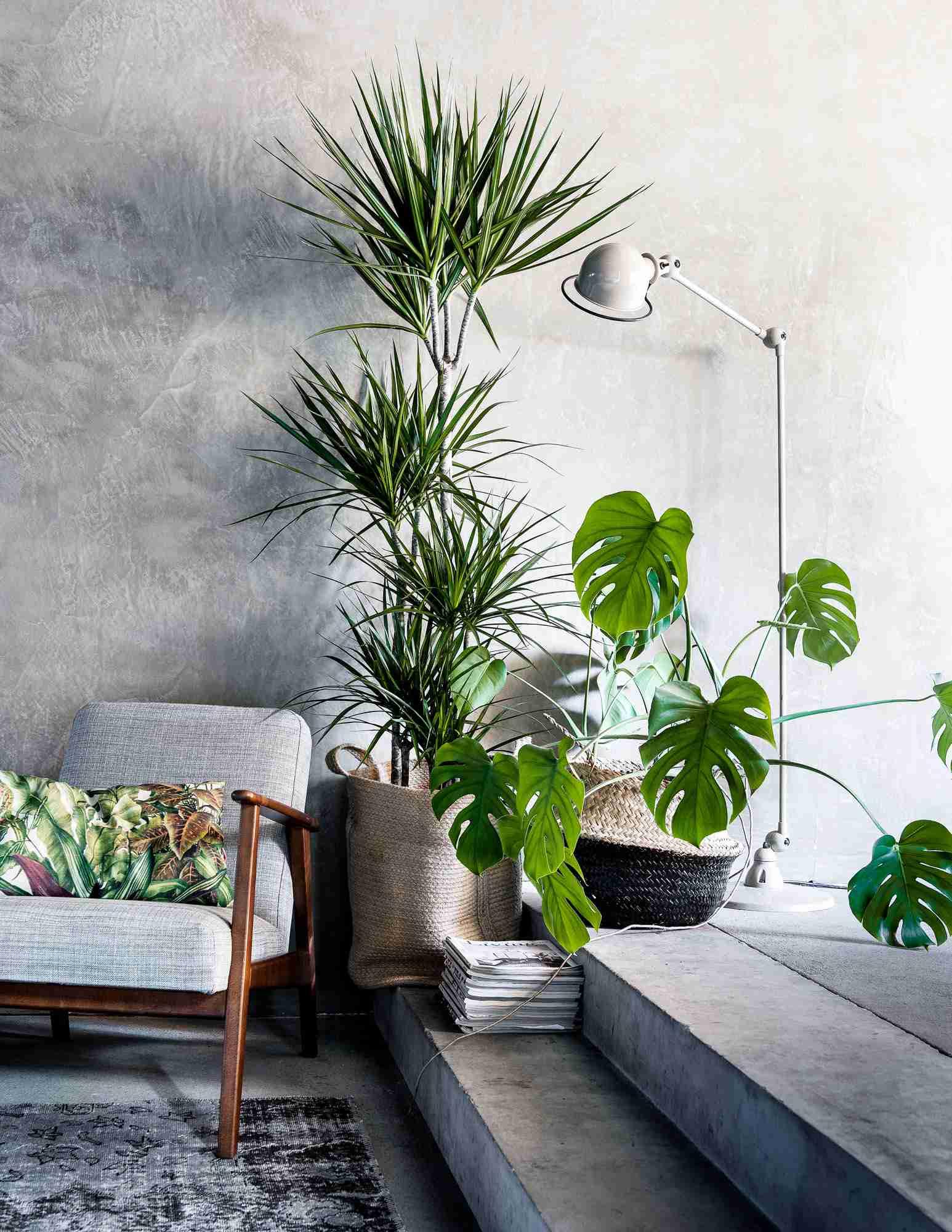 inside plants decoration - 736×951