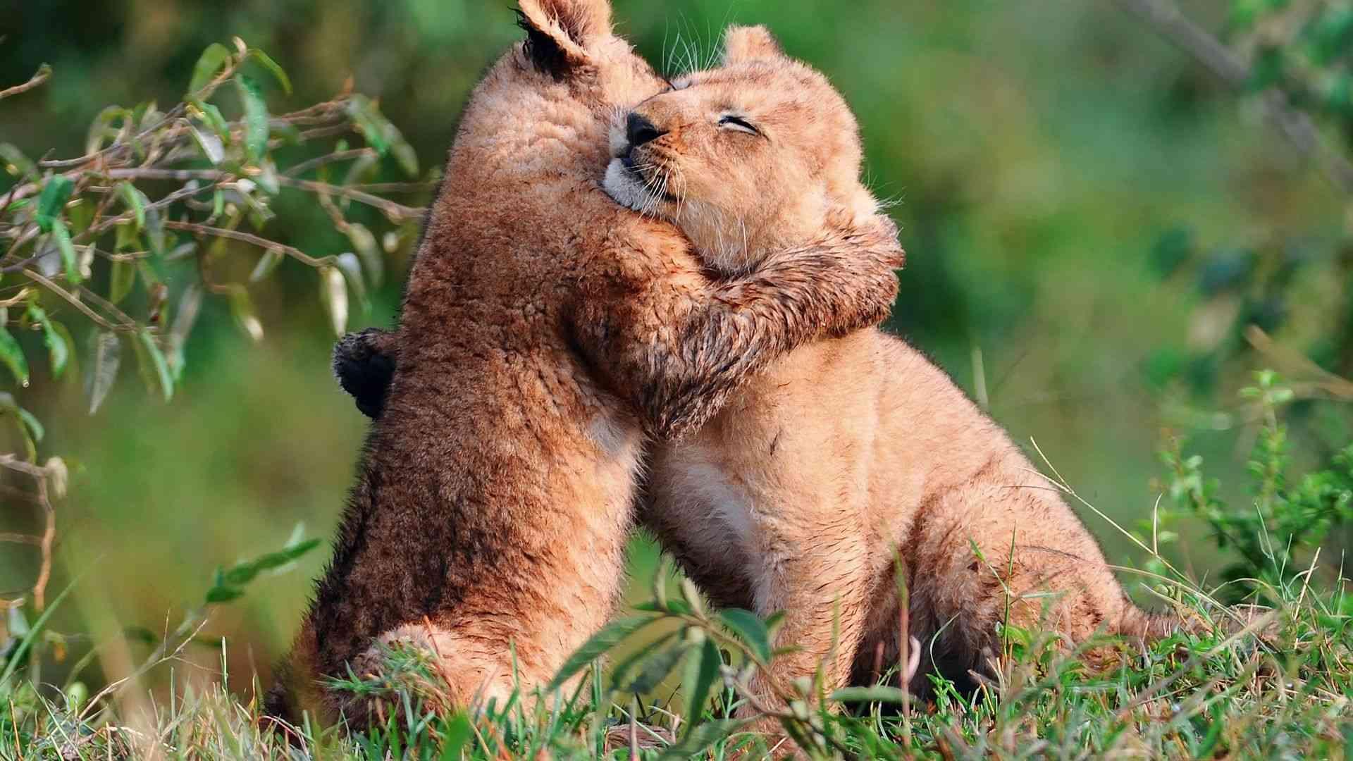 Животные с открыток про любовь