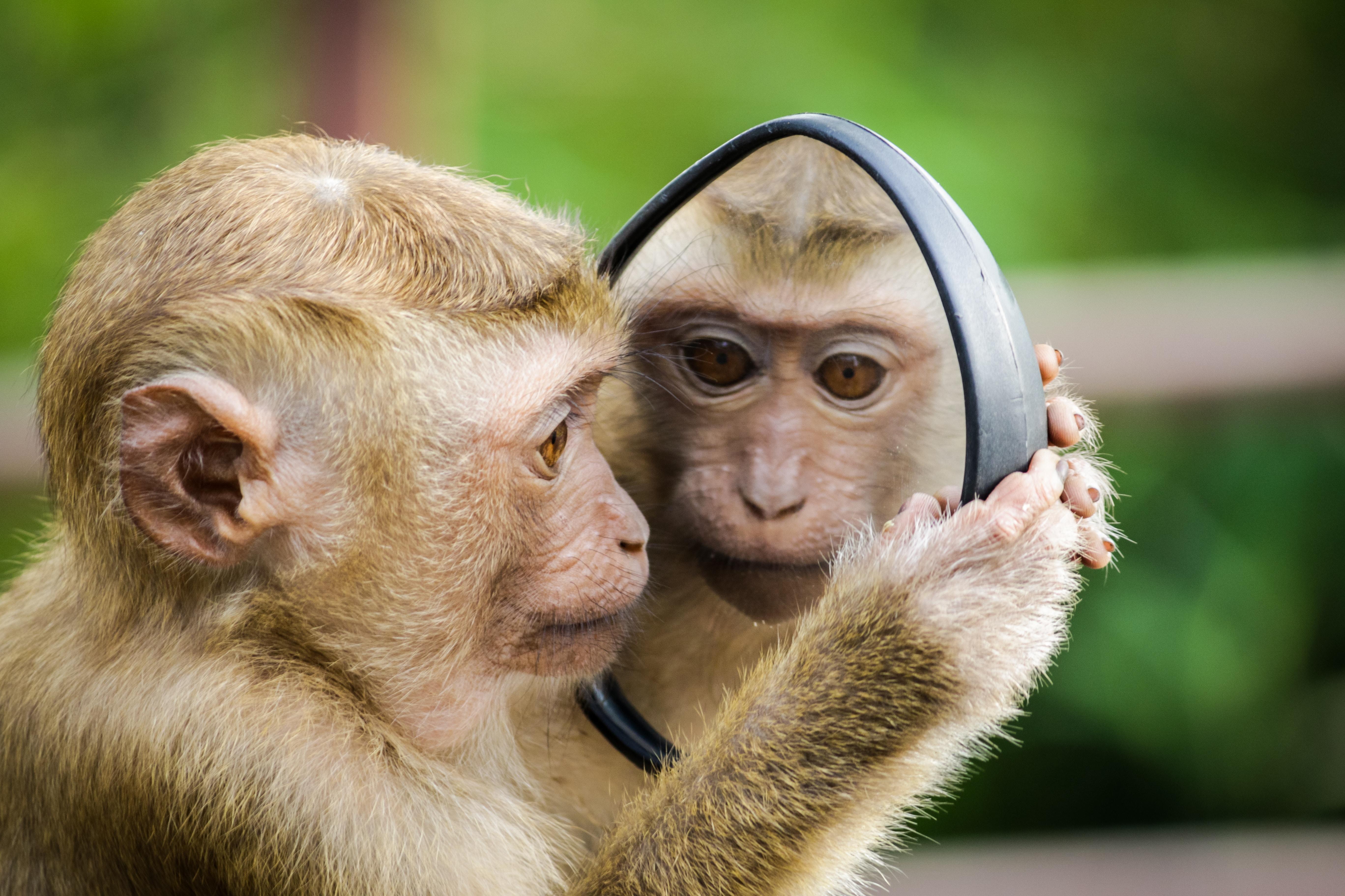 Картинки баран и обезьяна